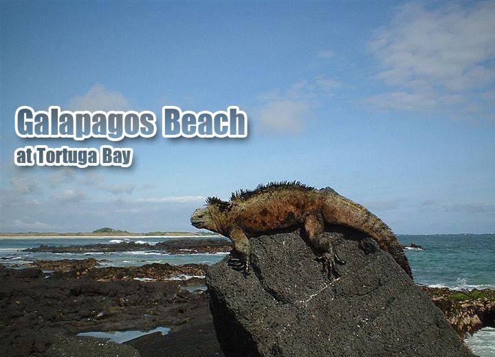 Galapagos-Beach