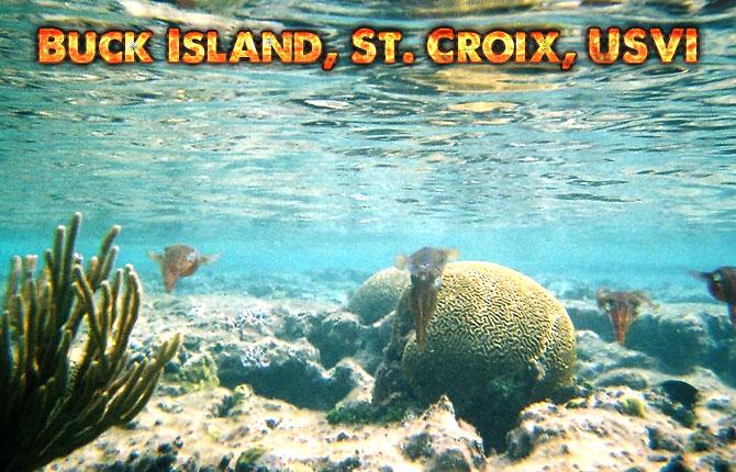 Buck-Island
