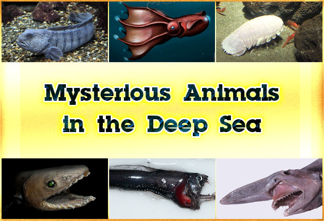 Photo of Mysterious Animals in the Deep Sea