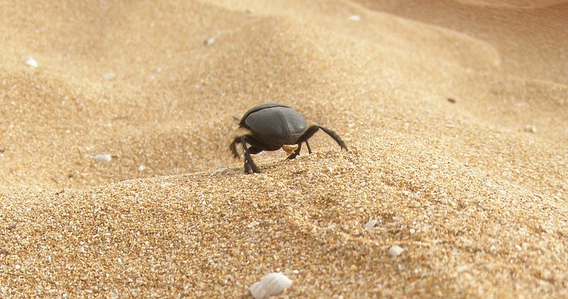 A bug crawling at the beach